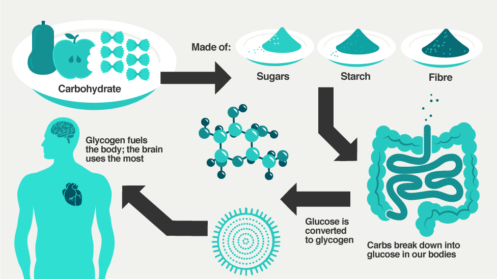 How carbohydrates turn to energy